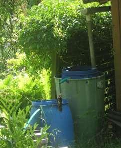 Buntspecht Garten
